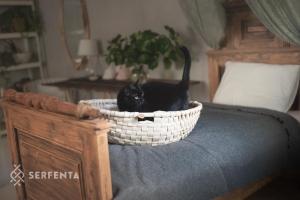 Zdjęcie przedstawia czarnego kota w koszu na zabwki.