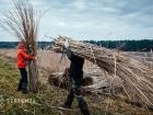 Family work, cattail harvest